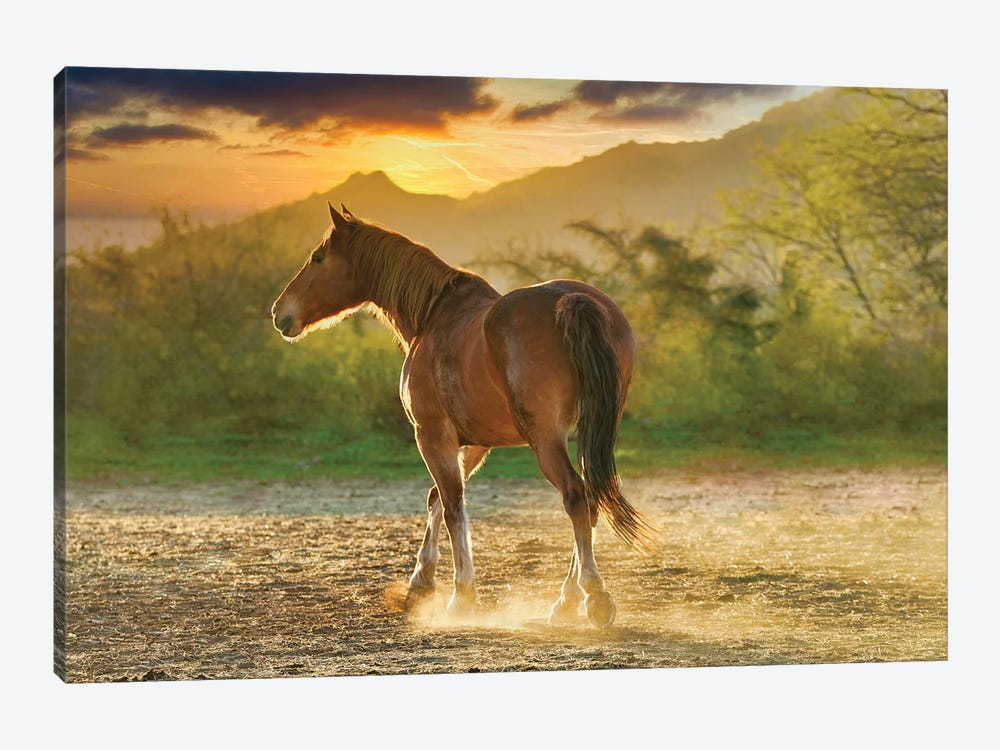 Sunset Pony by Rhonda Thompson 1-piece Canvas Art