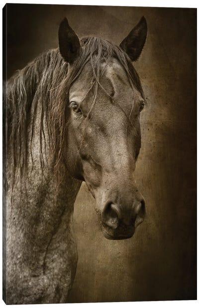 Black Horse Canvas Art Print