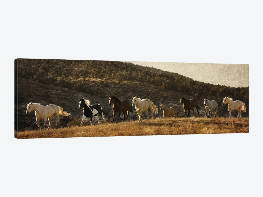Coming around the Mountian by Rhonda Thompson 1-piece Canvas Wall Art