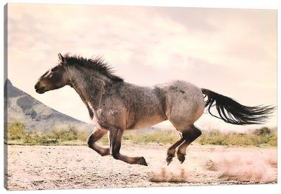 Running through the Desert Canvas Art Print