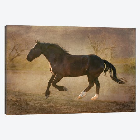 The Running Horse Canvas Print #RHT98} by Rhonda Thompson Canvas Art Print