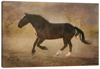 The Running Horse Canvas Art Print