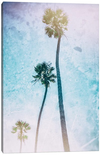 Candy Palms  Canvas Art Print