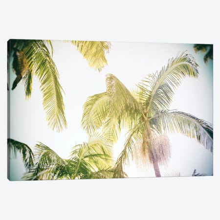 Luminous Palm View  Canvas Print #RHW28} by Ryan Hartson-Weddle Canvas Print