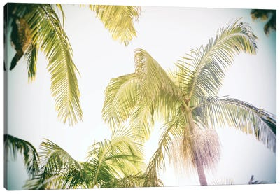 Luminous Palm View  Canvas Art Print