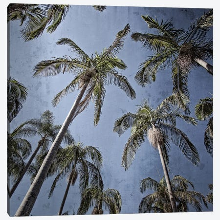 Palms Up I Canvas Print #RHW35} by Ryan Hartson-Weddle Canvas Art Print