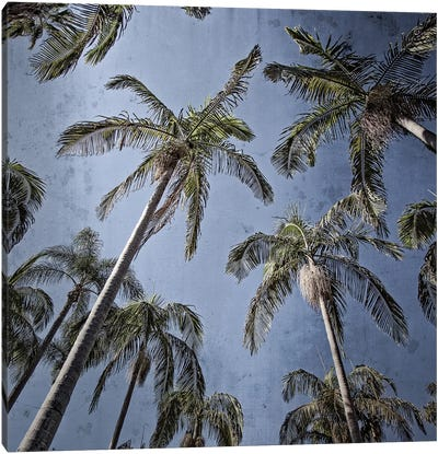 Palms Up I Canvas Art Print