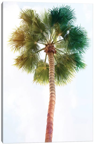 Palmetto I Canvas Art Print