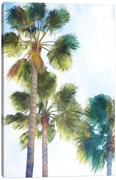 Palmetto II Canvas Art Print