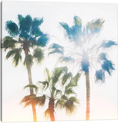 Palmetto IV Canvas Art Print