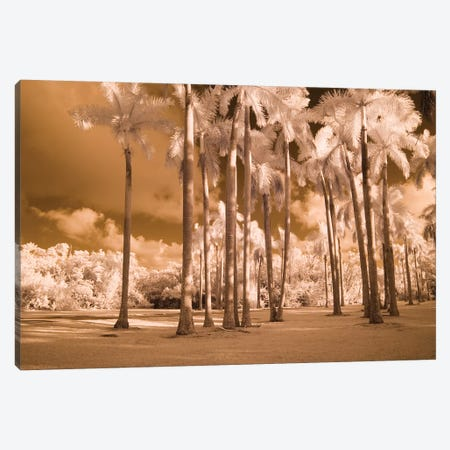 Florida Palms Canvas Print #RII3} by Rig Canvas Print