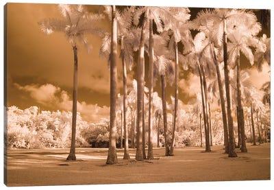 Florida Palms Canvas Art Print