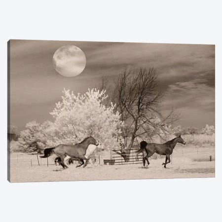 Moonlight Runners 3-Piece Canvas #RII6} by Rig Studios Canvas Artwork