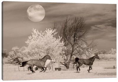 Moonlight Runners Canvas Art Print