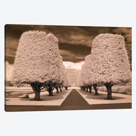 Row Of Trees Canvas Print #RII7} by Rig Studios Canvas Art