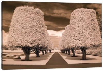 Row Of Trees Canvas Art Print