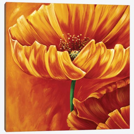 Poppies In Bloom I Canvas Print #RIX3} by Beatrix Frederiks Art Print