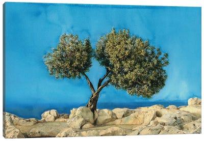 Olive Tree On Greek Island Thassos X Canvas Art Print