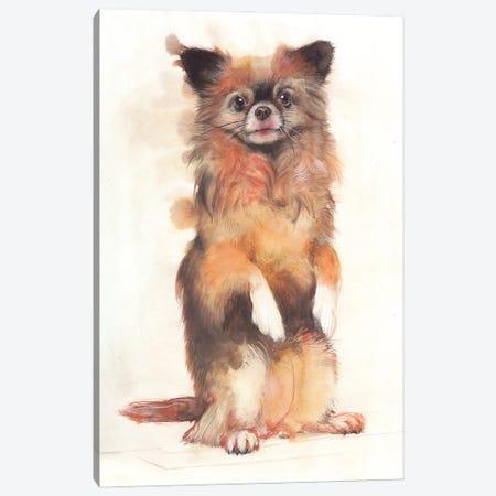 Dog II Canvas Print #RJR81} by REME Jr Art Print