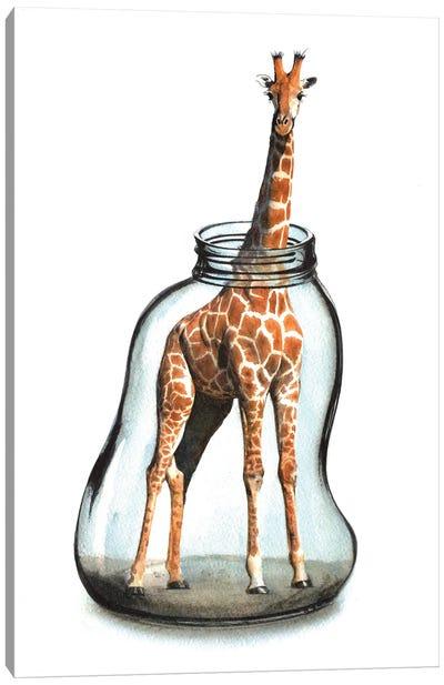 Giraffe In Jar VII Canvas Art Print