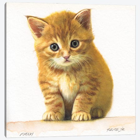 Kitten XXXIV Canvas Print #RJR91} by REME Jr Canvas Artwork