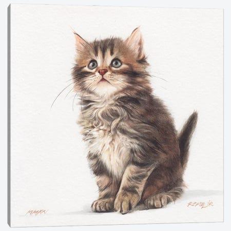 Kitten XXXII Canvas Print #RJR92} by REME Jr Canvas Art
