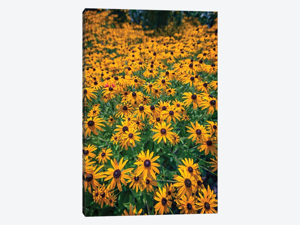 A Field Of Black Eyed Susans 1-piece Art Print