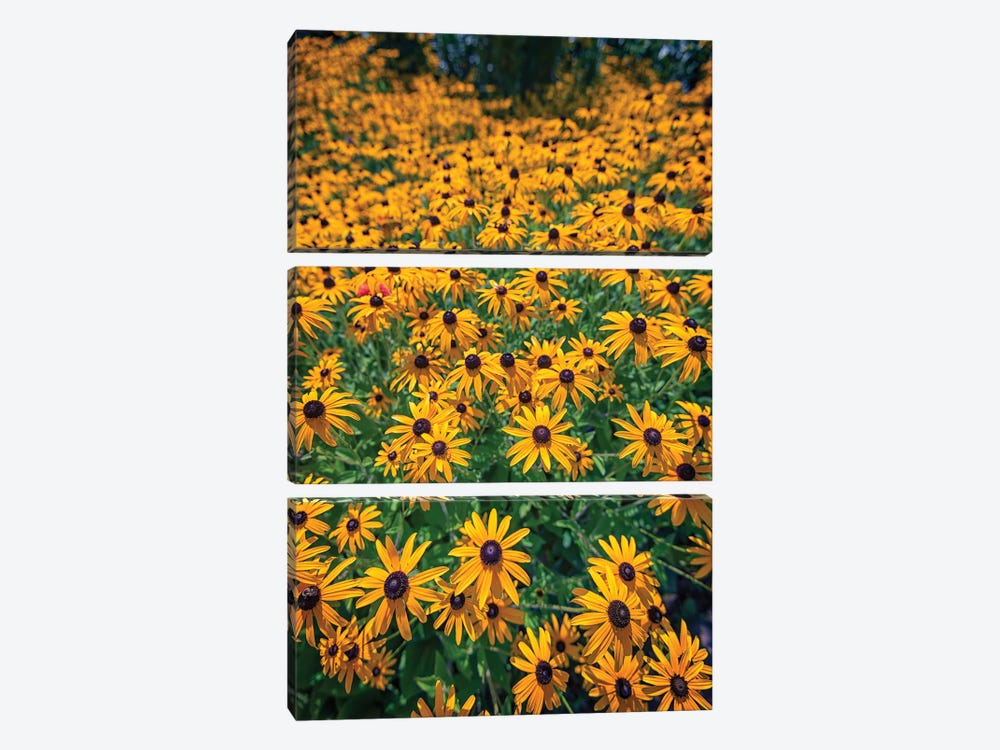 A Field Of Black Eyed Susans by Rick Berk 3-piece Art Print