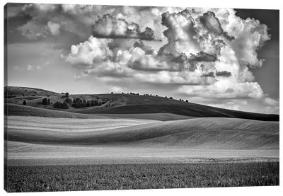 Spring Afternoon In The Palouse Black And White Canvas Art Print