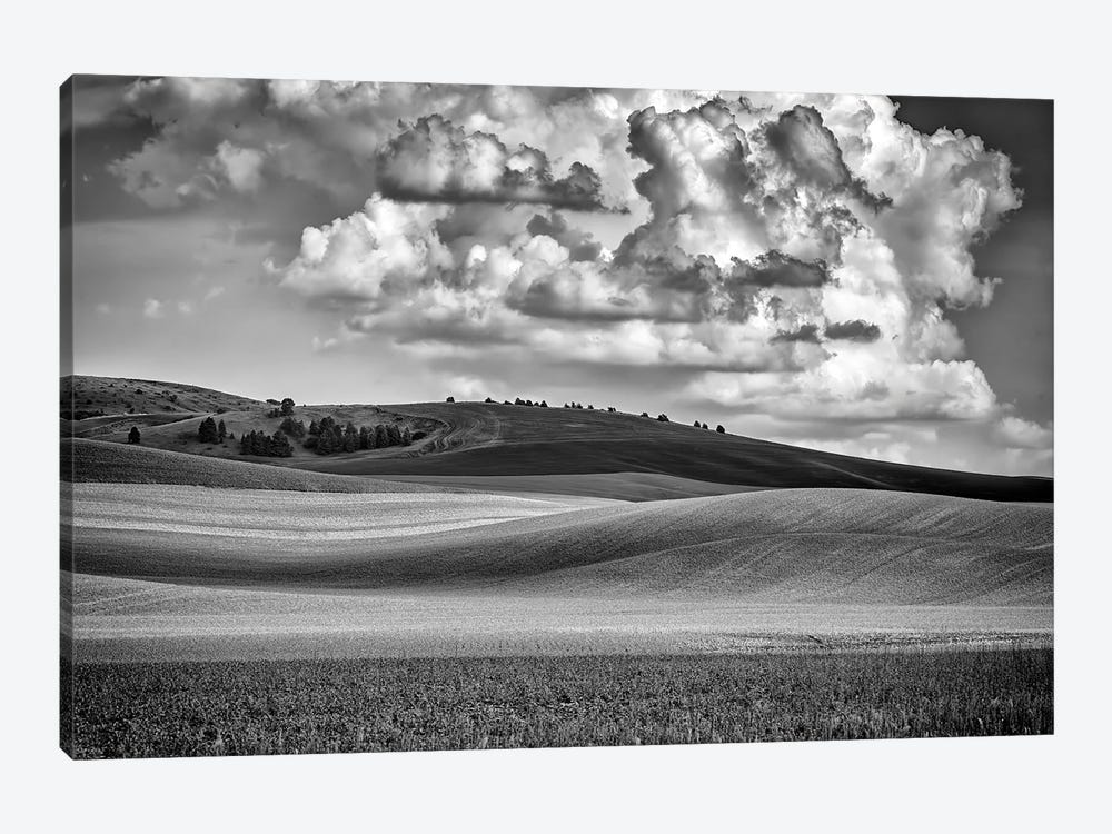 Spring Afternoon In The Palouse Black And White by Rick Berk 1-piece Canvas Art Print
