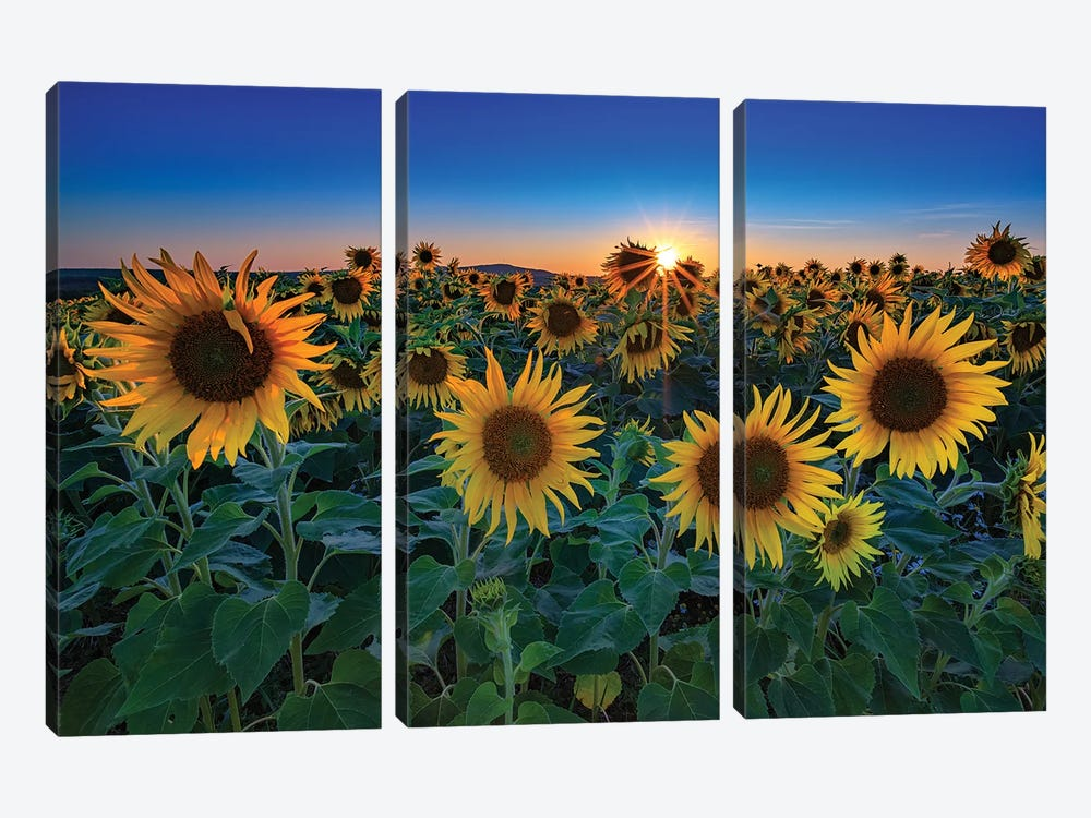 Aroostook Sunset by Rick Berk 3-piece Canvas Artwork