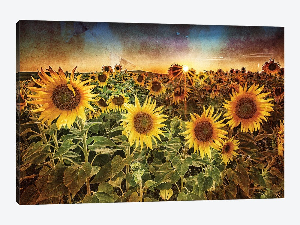 Aroostook Sunset Texture by Rick Berk 1-piece Canvas Print