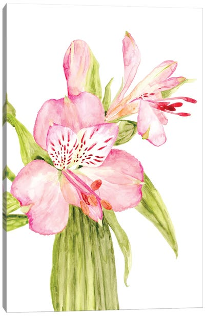 Pink Watercolor Alstroemeria Canvas Art Print