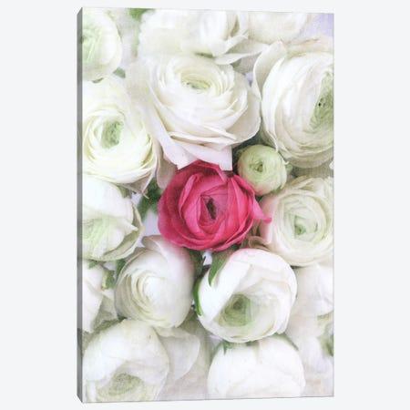 Vintage Ranunculus In White And Hot Pink Canvas Print #RLZ246} by blursbyai Canvas Art