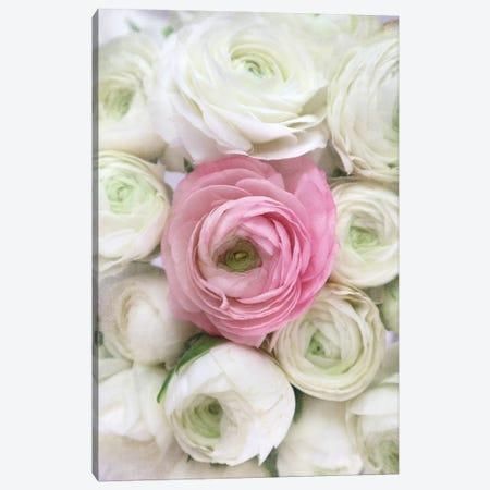 Vintage Ranunculus In White And Pink Canvas Print #RLZ247} by blursbyai Canvas Art