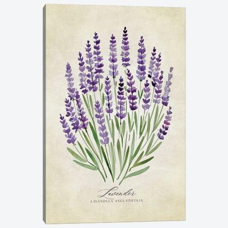 Vintage Watercolor Lavender Illustration Canvas Print #RLZ281} by blursbyai Canvas Art Print
