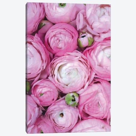 Ranunculus Extravaganza I In Fucshia Canvas Print #RLZ371} by blursbyai Canvas Print