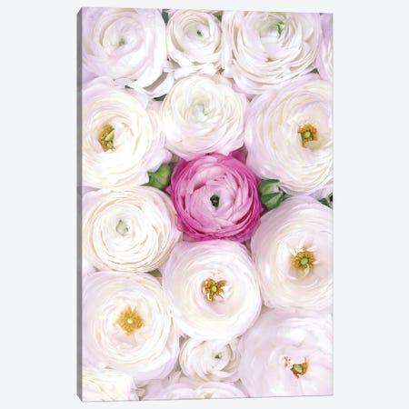 Ranunculus Extravaganza II In White And Fucshia Canvas Print #RLZ373} by blursbyai Art Print