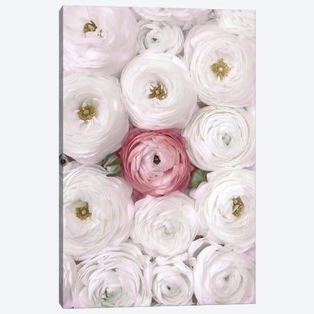 Ranunculus Extravaganza II In White And Blush Canvas Print #RLZ374} by blursbyai Canvas Art