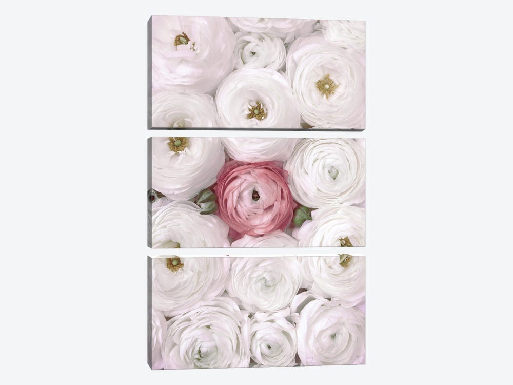 Ranunculus Extravaganza II In White And Blush by blursbyai 3-piece Art Print