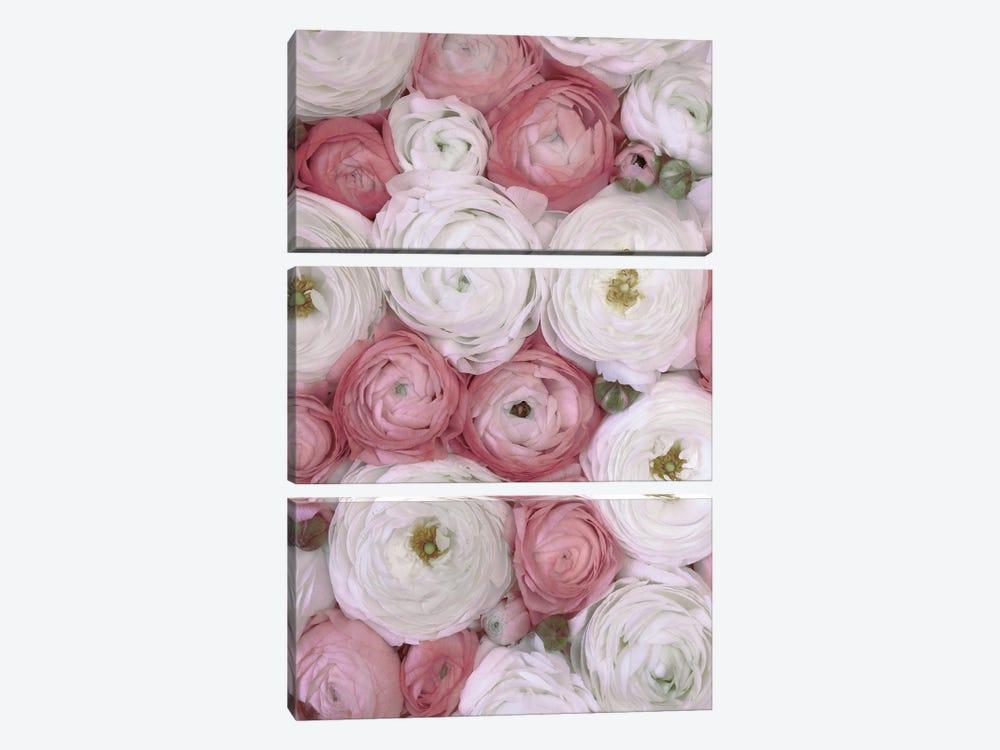 Ranunculus Extravaganza IV In Blush by blursbyai 3-piece Art Print