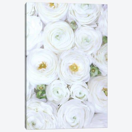 Ranunculus Extravaganza In Extra White Canvas Print #RLZ379} by blursbyai Canvas Art Print