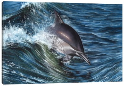 Dolphin Canvas Art Print