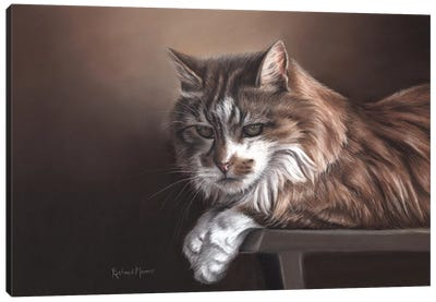 Domestic Cat Canvas Art Print