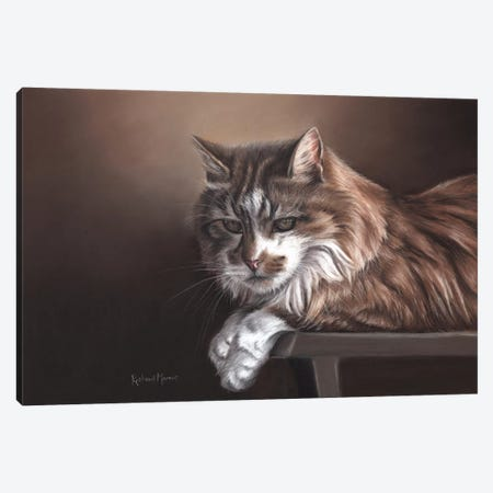 Domestic Cat Canvas Print #RMC11} by Richard Macwee Canvas Wall Art