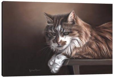 Domestic Cat Canvas Art Print