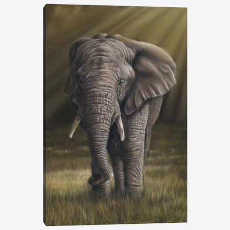 Elephant Canvas Print #RMC13} by Richard Macwee Canvas Art