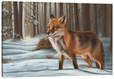 Fox In Snow Canvas Art Print