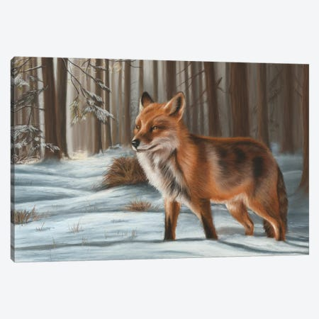 Fox In Snow Canvas Print #RMC17} by Richard Macwee Art Print