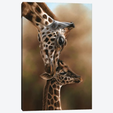 Giraffes Canvas Print #RMC18} by Richard Macwee Canvas Art